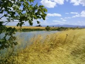 July 2015 Singing Creek Landscape