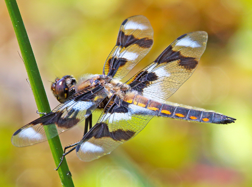 Dragonfly Day May 2016